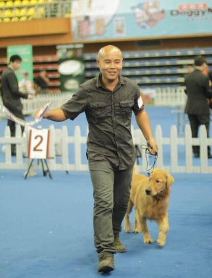 南宁宠物犬训练,南宁宠物犬训练价格