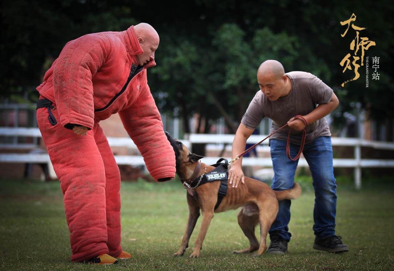 南宁宠物犬训练介绍怎样训练狗狗听话