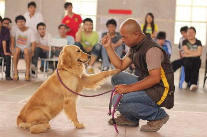 南宁宠物犬训练价格